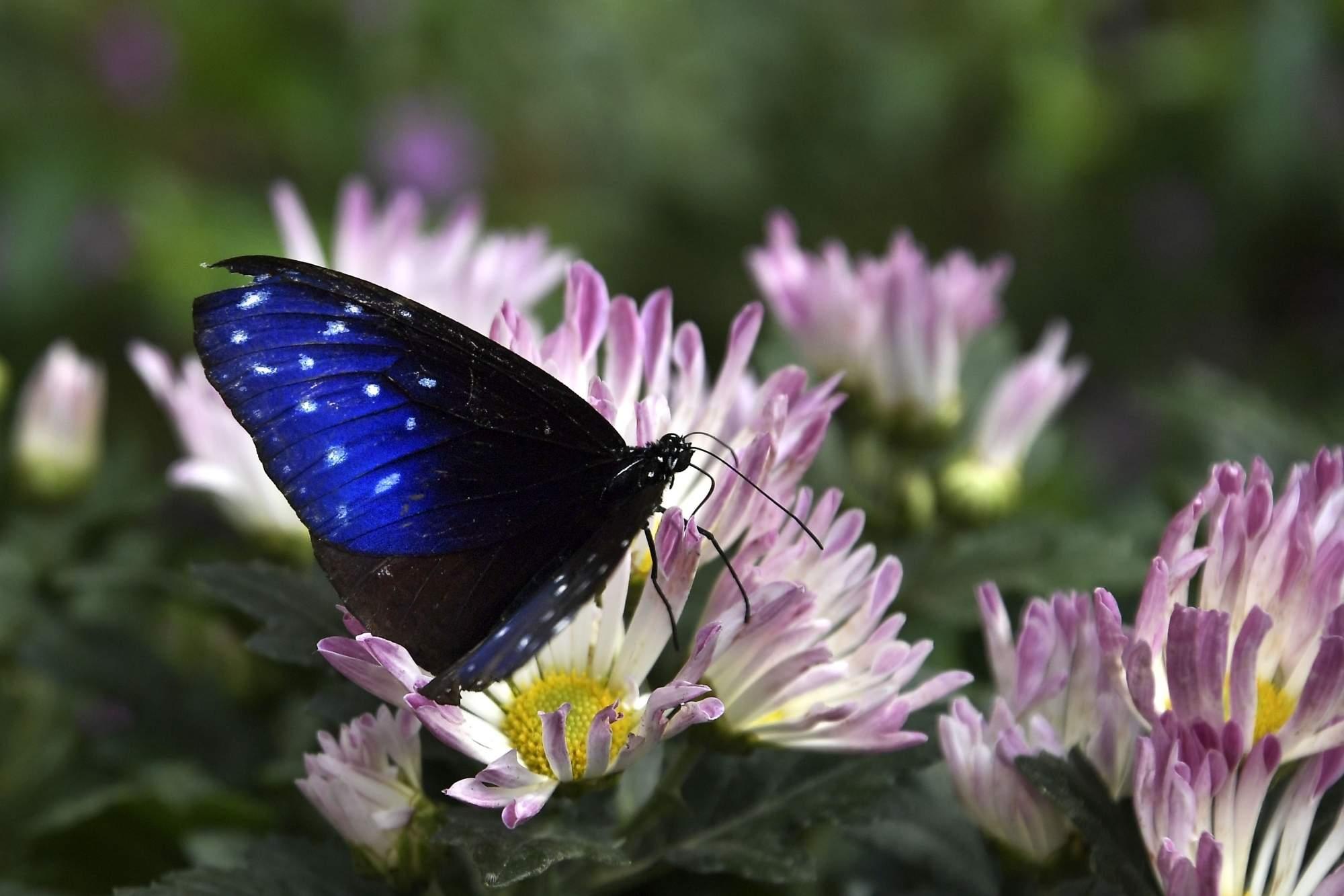 Butterfly Valley in Yishui County