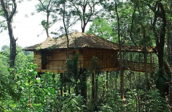 Tranquil_Tree_House