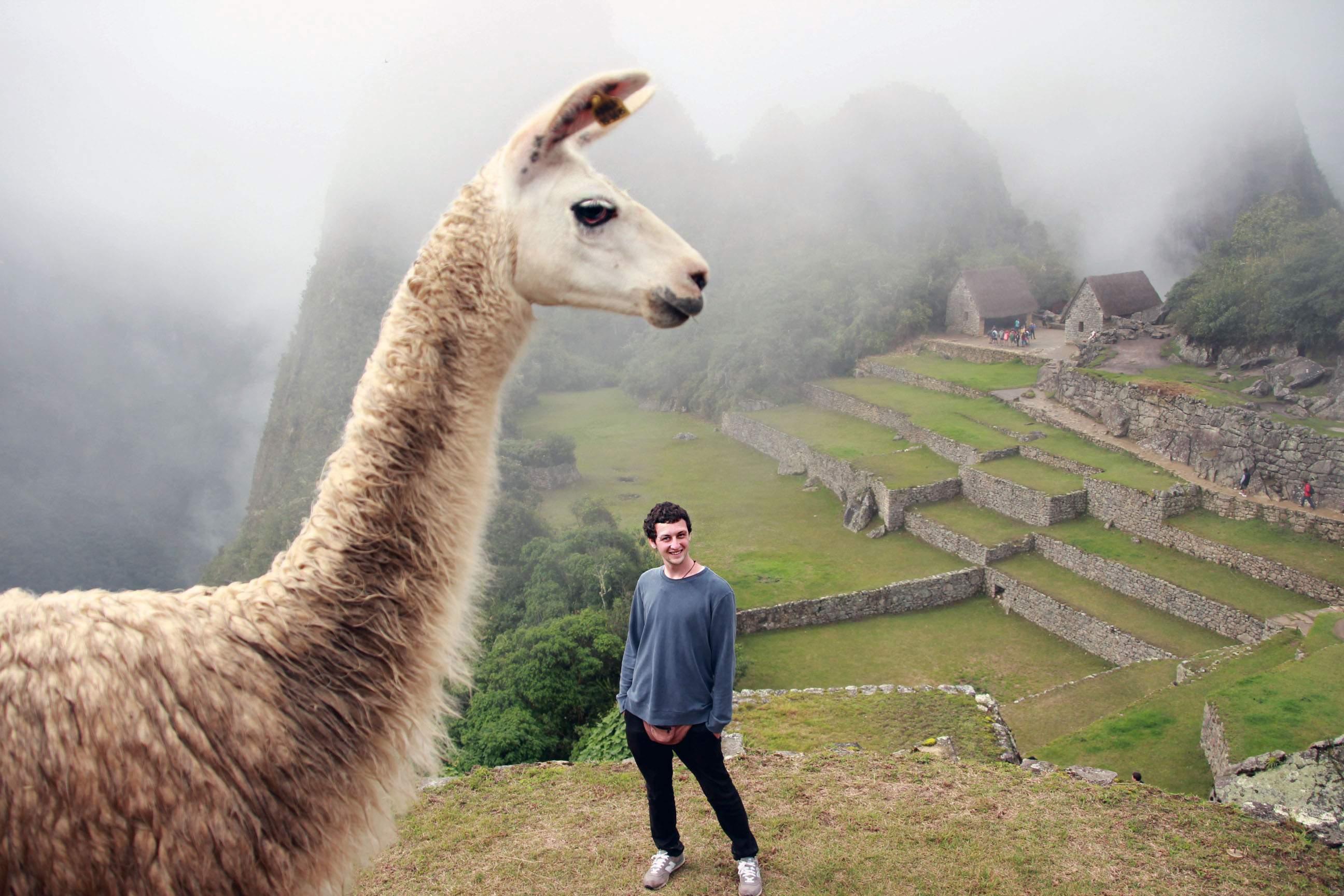 Spitting Lama in Machu Picchu, Peru