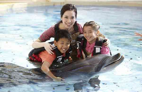 Dolphin encounter at Ocean Park