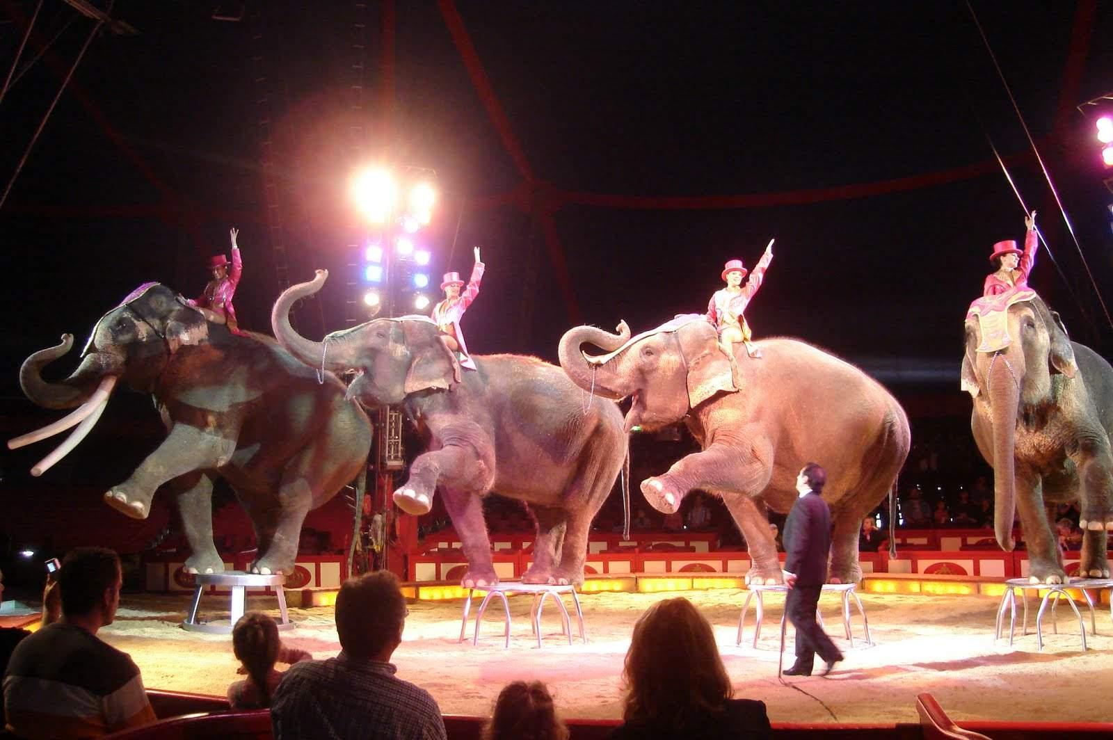 circus inmarathi