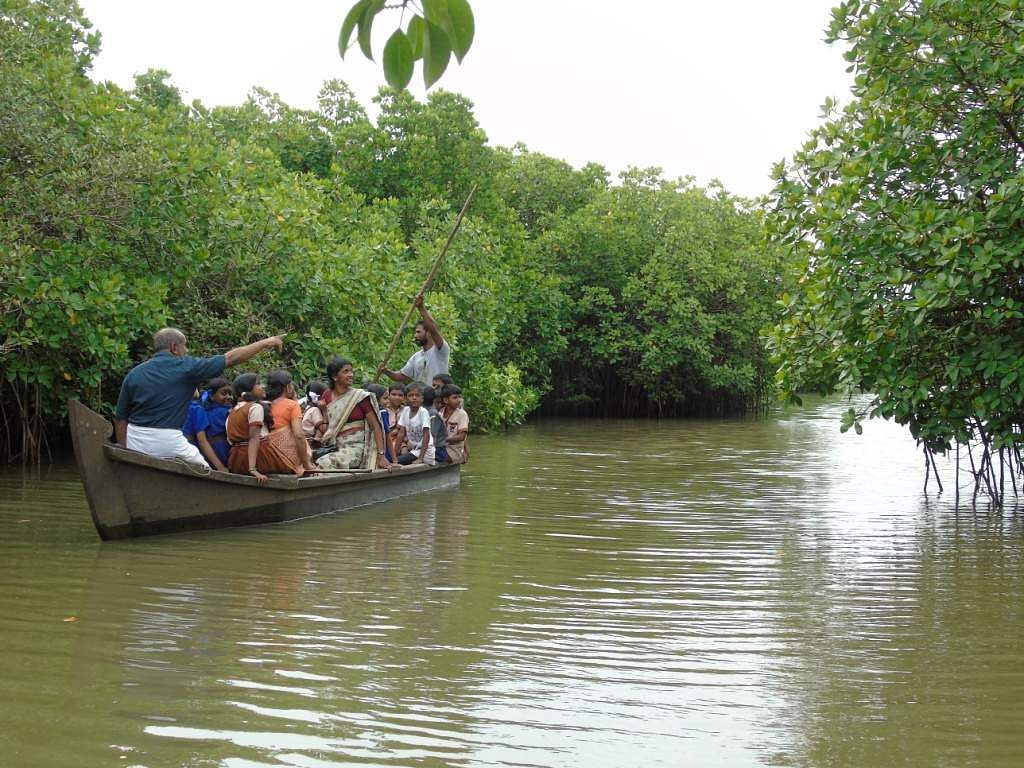 This Eco Movement In Kerala Stresses The Importance Of Mangroves-9217