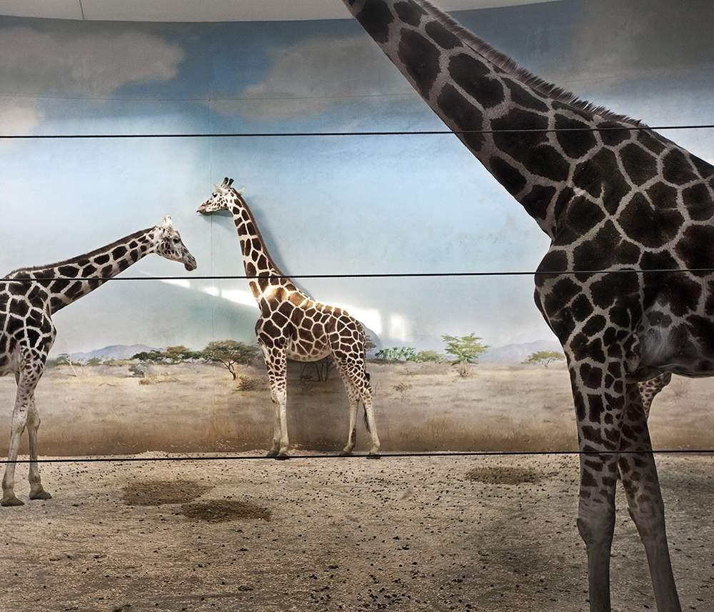 © Asmita Parelkar  Giraffe Behind the Door, 2013-2015. Image courtesy the artist and JaipurPhoto