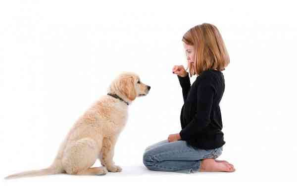 child-training-dog