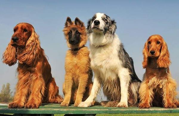 Canine_Camp