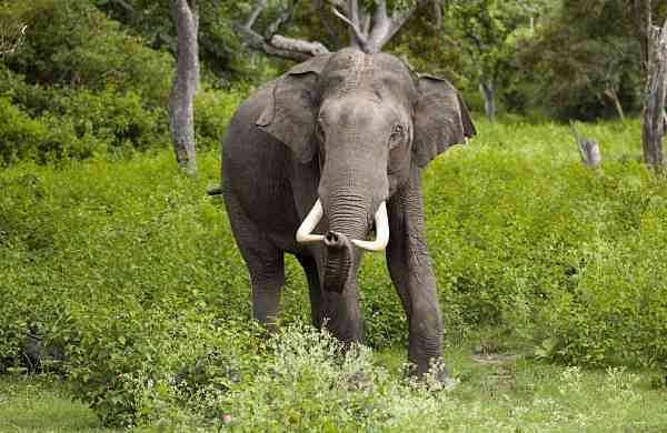 Elephant hd photo