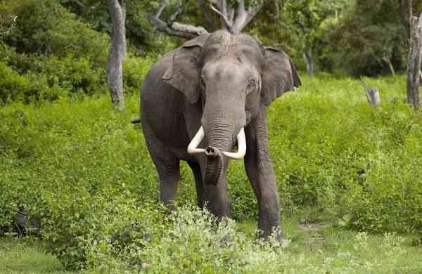 Elephant hd photo