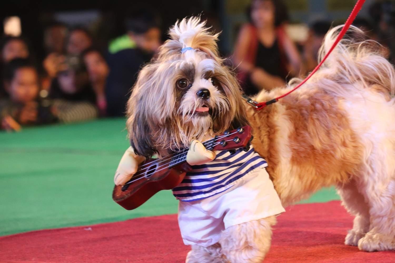 2nd Winner Fashion Show at Pet Fed Bengaluru; Pet Name: Whiskey