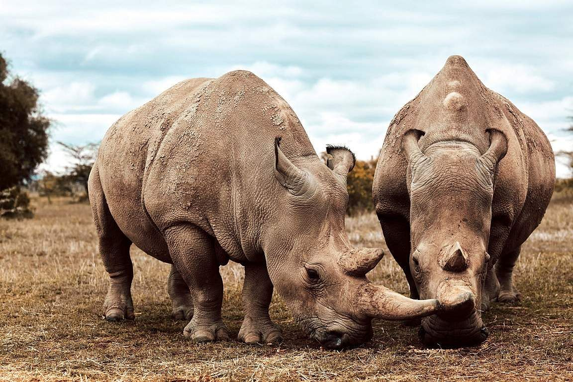 A herd of rhinoceros on Seven Worlds: One Planet