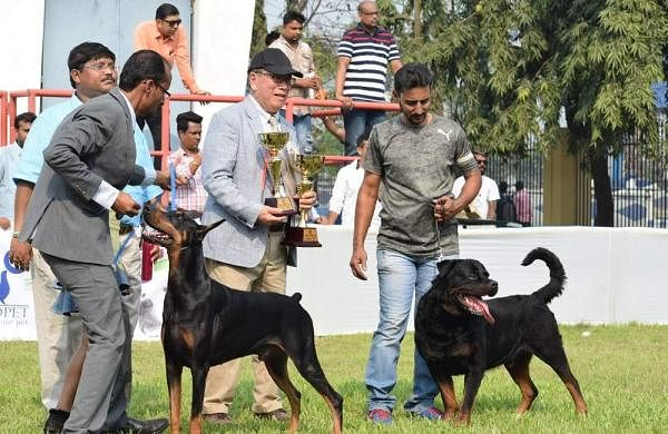 Calcutta Kennel Club Show 2018