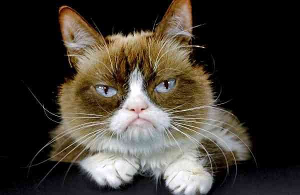 2015 file photo: Grumpy Cat in Los Angeles. (AP Photo/Richard Vogel)