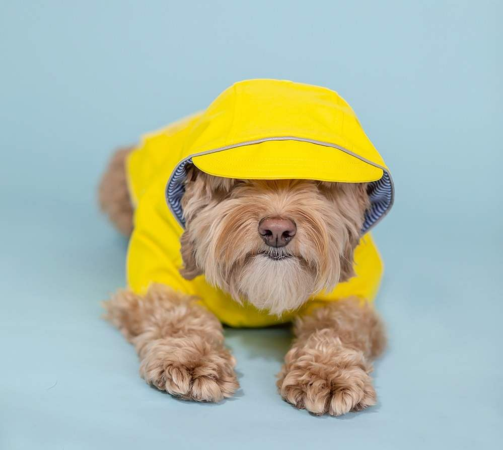 canadian-dog-magazine-yellow-dog-rain-coat-3