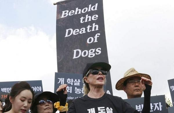 American actress Kim Basinger speaks at a rally to oppose eating dog meat in front of the National Assembly in Seoul, South Korea. (AP Photo/Ahn Young-joon)
