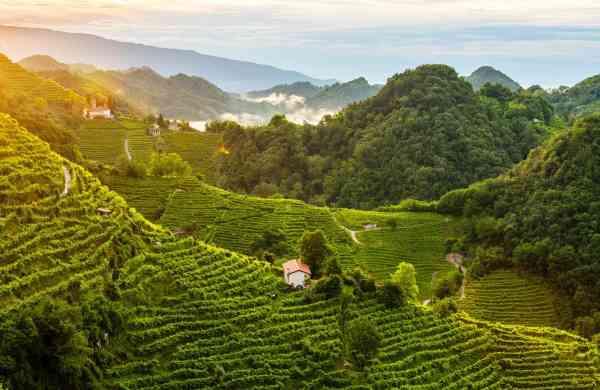 Prosecco Hills in Unesco World Heritage list