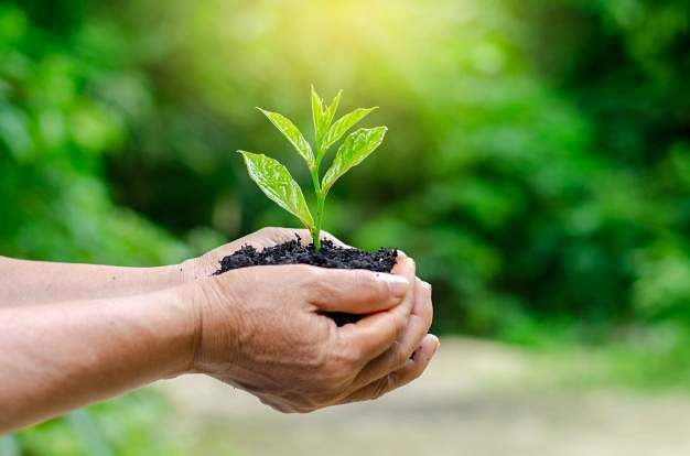 hands-trees-growing-seedlings-bokeh-green-background-female-hand-holding-tree_34998-141