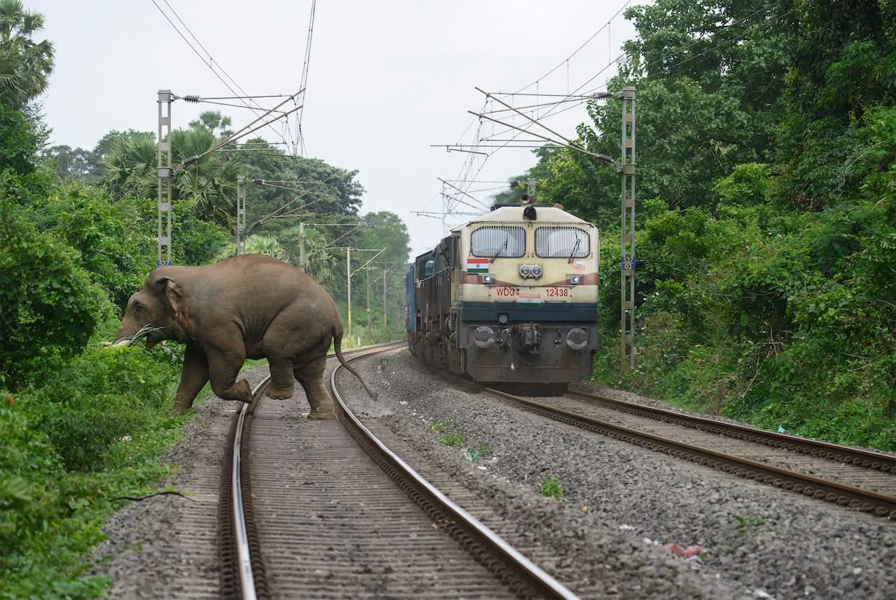 A picture shot by Aneesh Sankarankutty