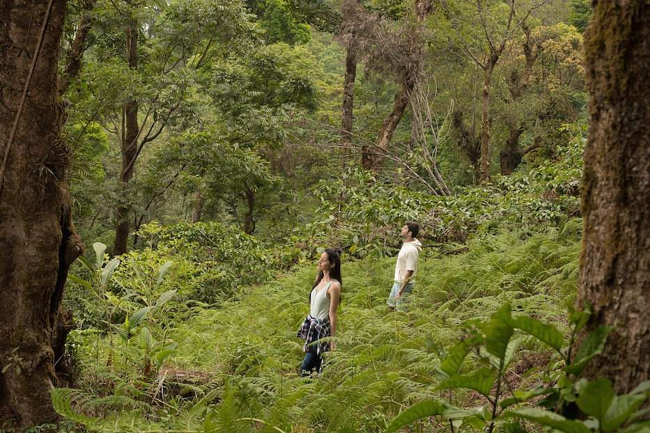 Forest Therapy at Tamara Coorg