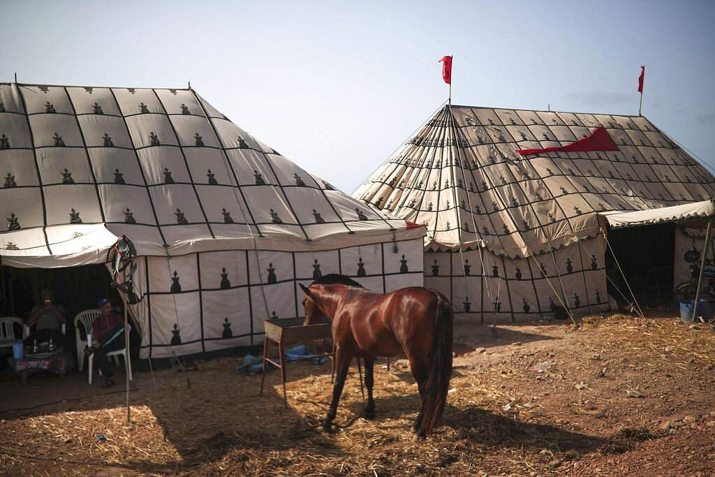 A horse feeds at a tent before it is prepared to take part in Tabourida, a traditional horse riding show also known as Fantasia, in the town of El Jadida, Morocco. (AP Photo/Mosa'ab Elshamy)