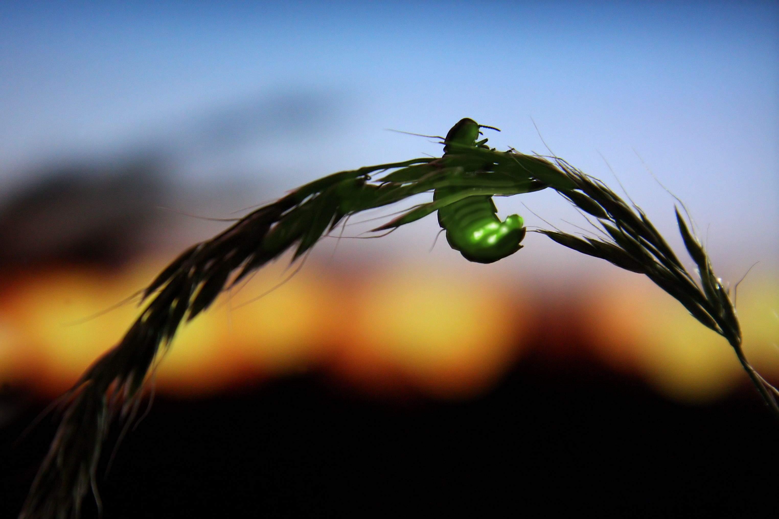 Fireflies species face extinction (AFP Photo/TUFT University/Jason Steel)