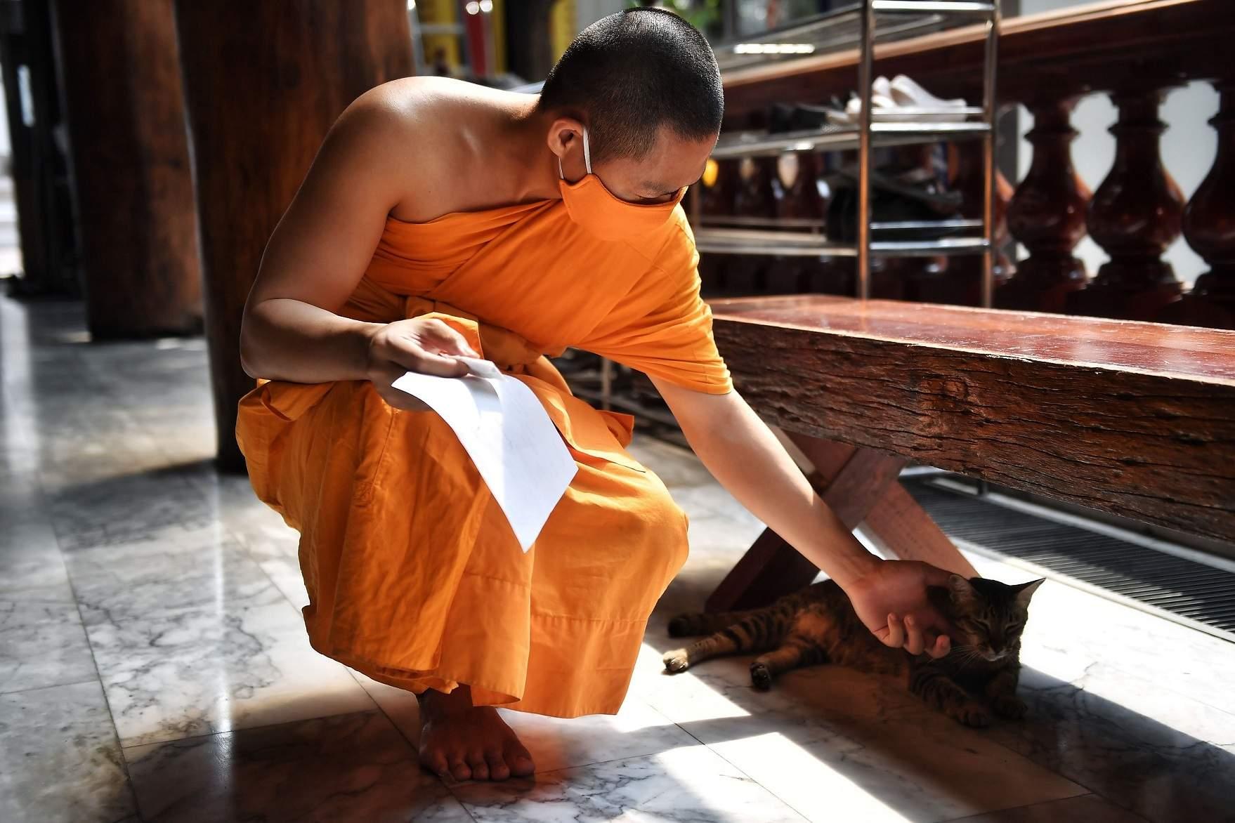 Bangkok, Thailand: A Buddhist monk wearing a face mask amid concerns over the spread of the coronavirus pets a cat at Wat Pak Nam Buddhist temple in Bangkok. (AFP/Lillian SUWANRUMPHA)