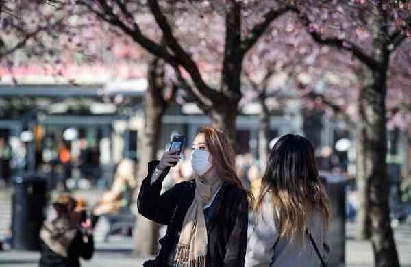 Blooming cherry trees in Kungstradgarden park, Stockholm (AFP/TT News Agency/Jessica Gow)
