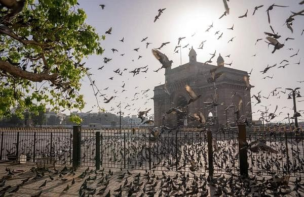 Mumbai: Flocks of pigeons at the Gateway of India during the complete nationwide lockdown to contain the spread of the coronavirus. (Photo: IANS)