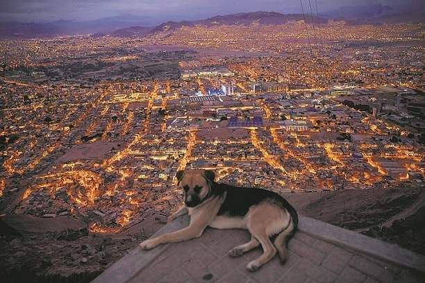 Lima, Peru: A dog rests with the background of Lima minutes before the start of a curfew decreed by the government in Peru. (AP Photo/Rodrigo Abd)