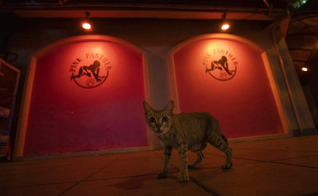 A cat walks past a closed bar in the entertainment district of Bangkok. A month-long state of emergency has been enforced in Thailand to control the coronavirus. (AP Photo/Sakchai Lalit)