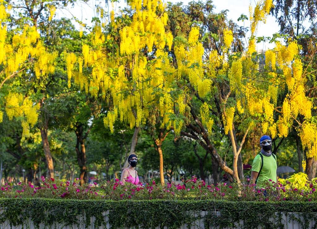 Tourists wearing protective masks walk in a park in Bangkok, as a month-long state of emergency has been enforced in Thailand to control the coronavirus. (AP Photo/Gemunu Amarasinghe)