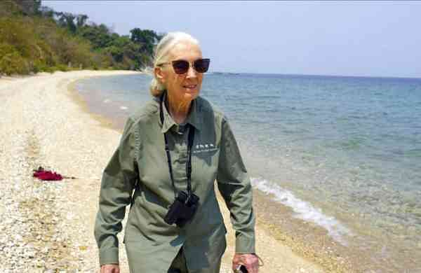 Dr Jane Goodall (Michael Haertlein/National Geographic via AP)
