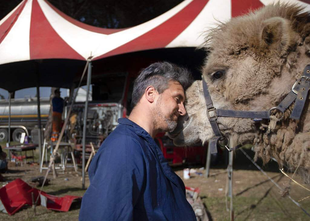 Rony Vassallo puts his head to his camel at the Rony Roller circus, parked on the outskirts of Rome. (AP Photo/Alessandra Tarantino)