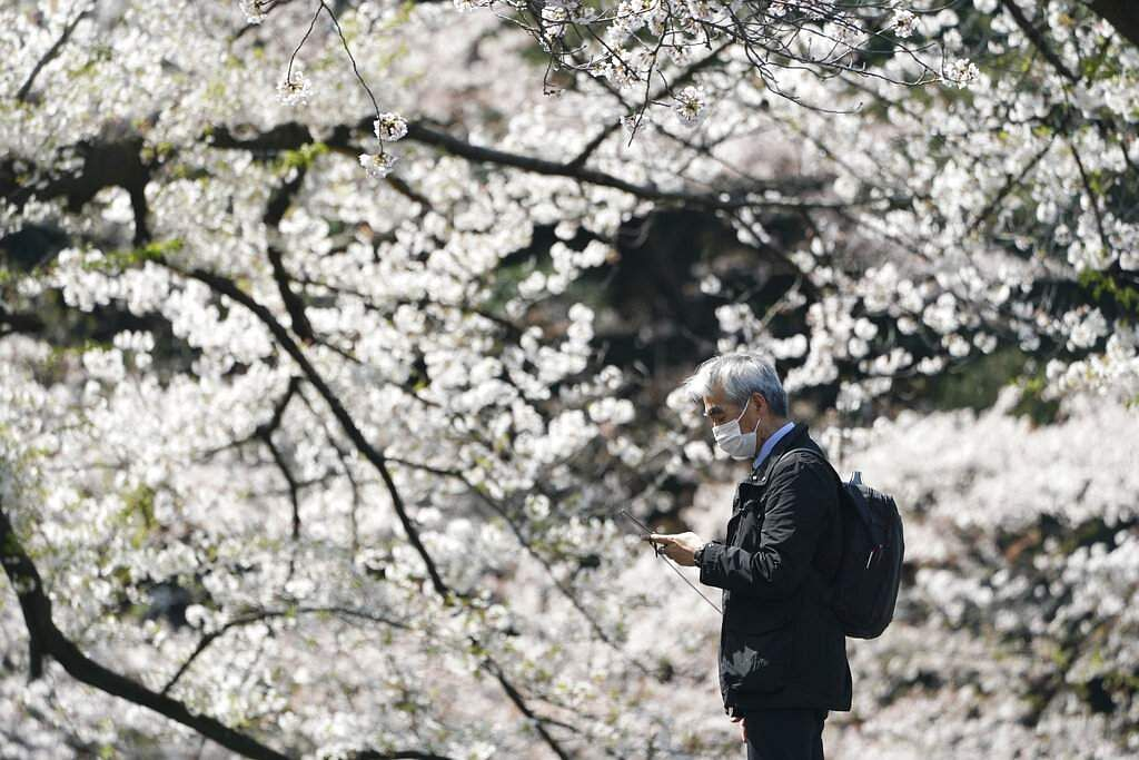 A man wearing a protective face mask stands near blooming cherry blossom trees in Tokyo. Japan. (AP Photo/Eugene Hoshiko)