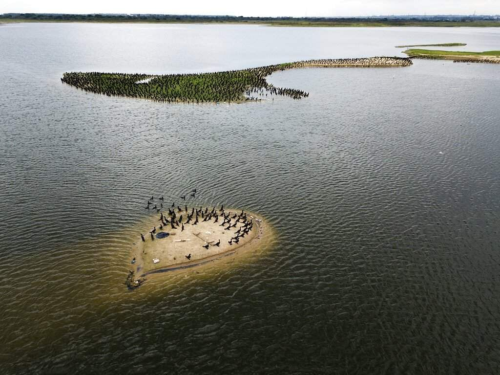 Birds reappear in the bay amid the lack of cars along the coastal highway due to a quarantine imposed by the government to stop the novel coronavirus in Asuncion, Paraguay. (AP Photo/Jorge Saenz)