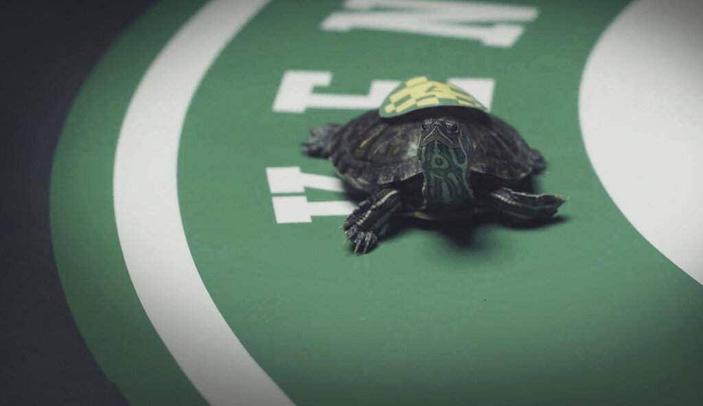 Kentucky Turtle Derby, Chicago (Dominic Udell/Brown-Forman via AP)