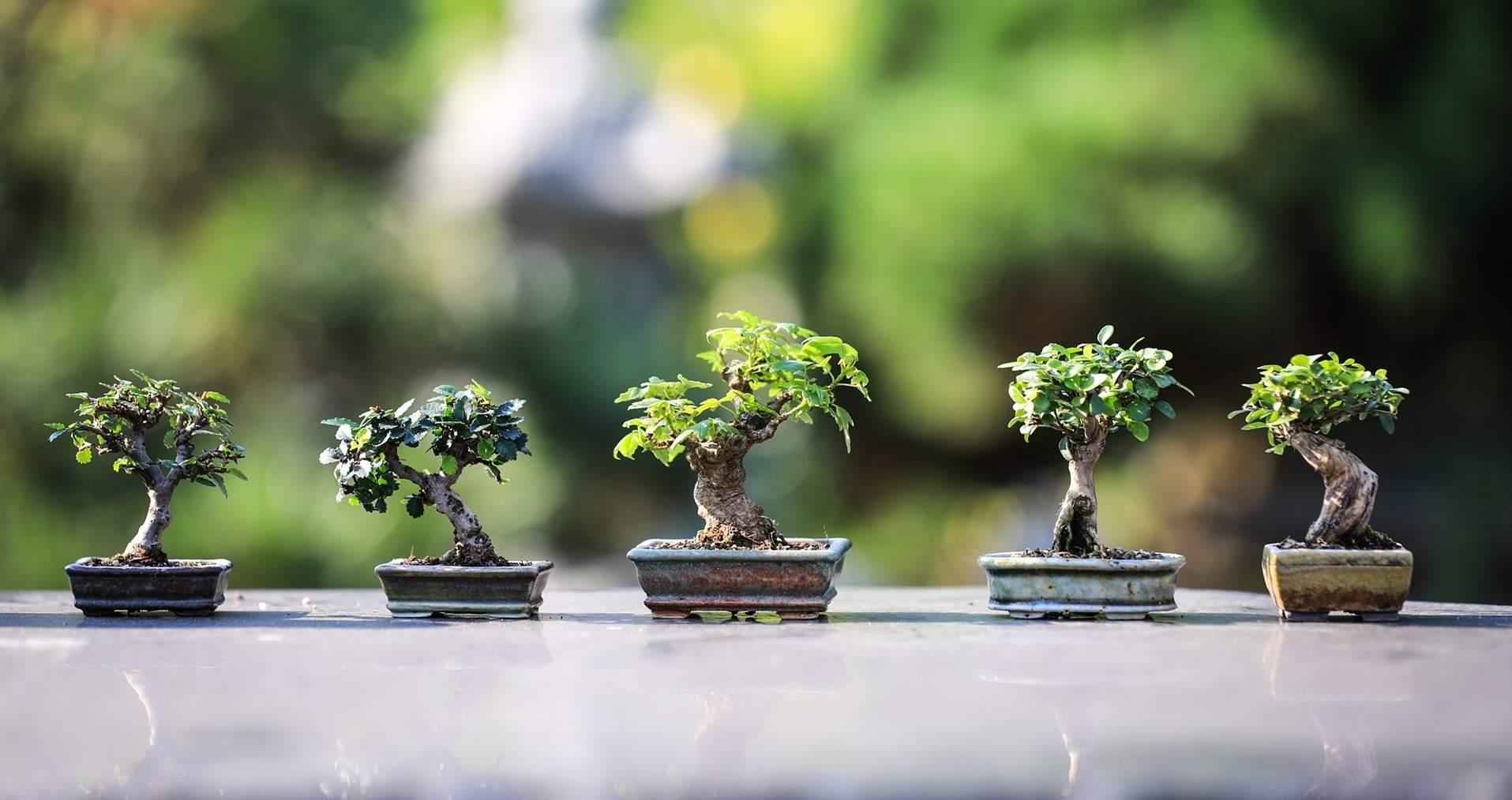 bonsai-4634225_1920