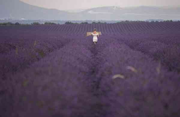 Fields of lavender in Puimoisson, southern France (AFP / Christophe Simon)