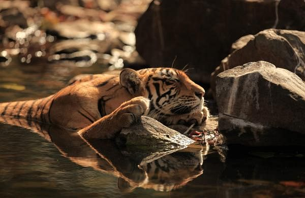 Photograph_9_National_Geographic_Secret_Life_Of_Predators