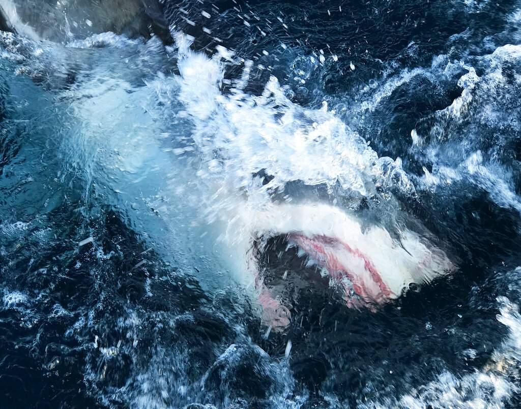 Shark Lockdown (Discovery Channel via AP)