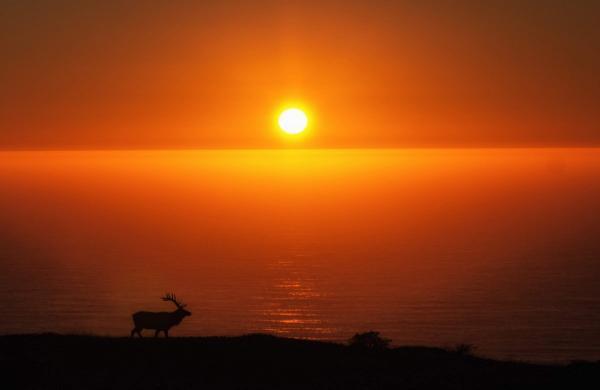 Amoghavarsha_JS_Elk_Wildlife_Shot