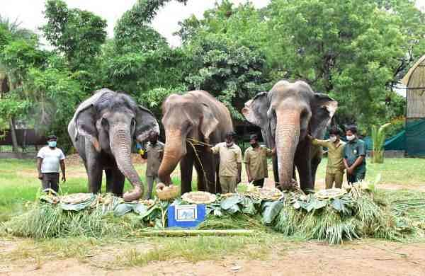 Elephants at Hyderabad Zoo (IANS)