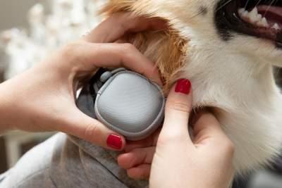 Pet care tech