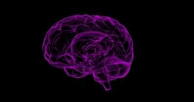 Scientists in the UK build first modular quantum brain sensor