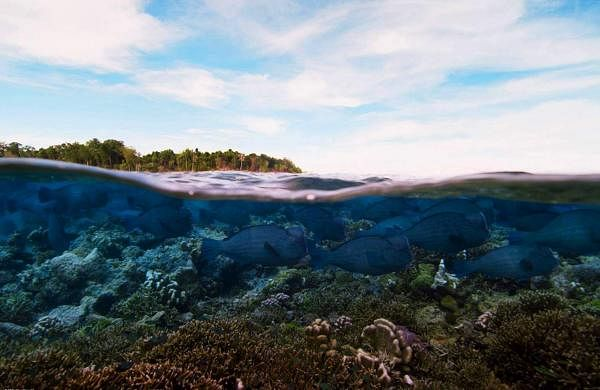 World Ocean Day: The unique 'Megadome' camera films both underwater and over the water at the same time