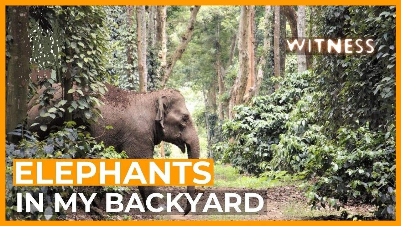 Elephant in my backyard film